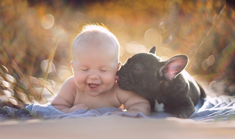 cachorro-bulldog-frances-bebe